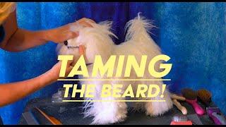 Taming Your Dog's Beard