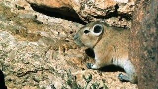 Investigadores españoles e israelís descubren nueva especie animal
