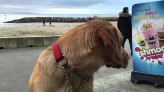 Lyme Regis Jan 2016