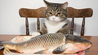 Я РЖАЛ ПОЛЧАСА. Смешные Коты и Собаки. ПРИКОЛЫ С ЖИВОТНЫМИ. #7