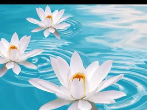 The Merit White Lotus Sutra ปุณฑริกสูตร mp3