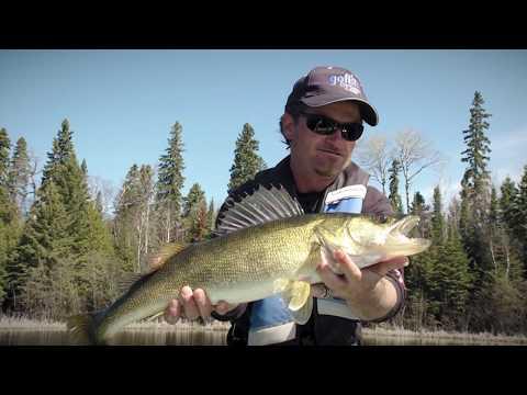Lake Has Trophy Walleye In It | Fish'n Canada