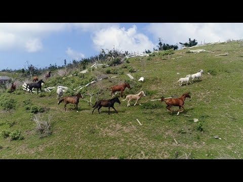Power Beauty Redemption - Rescue Horses BVI