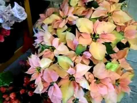 Austin TX Florist - Flower Shop in Austin, TX 78702