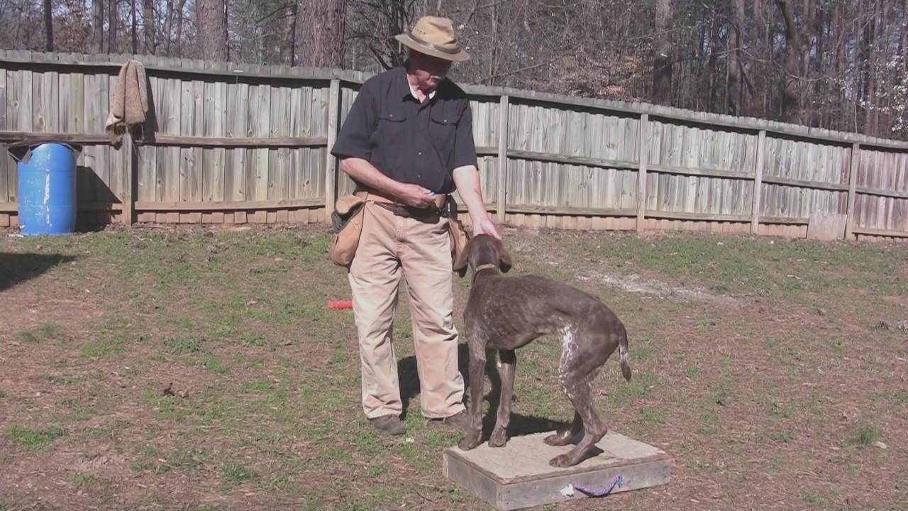 Dog Training Wv