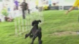 Prestigious dog show opens in New York