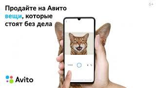 Avito: Коты 1