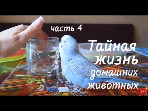 ОЗВУЧКА ДЛЯ ВЗРОСЛЫХ (ТАЙНАЯ ЖИЗНЬ ДОМАШНИХ ЖИВОТНЫХ) 18+