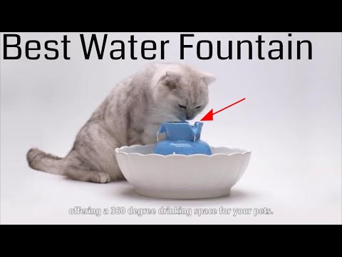 Best Water Fountain for Cats and Dogs - pet water fountain for cats and dogs with filter 2019