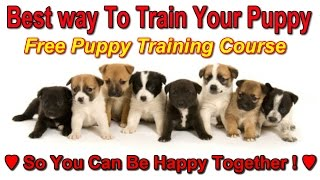 Best Way To Potty Train A Puppy  ★★ FREE COURSE ★★  How To Train A Puppy ♥ ♥ ♥
