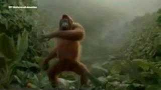 Прикол про обезьян