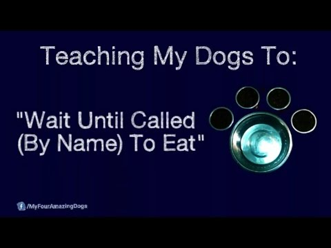 Teaching Dogs To Wait Until Called To Eat