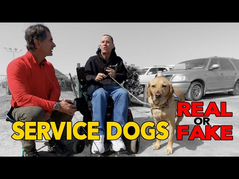 SERVICE DOGS - Why are FAKE Service Dogs Such a Problem