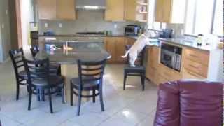 Beagle Eats Hot Oven Nuggets