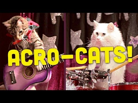 There's A Cat Circus And It's Just As Amazing As It Sounds