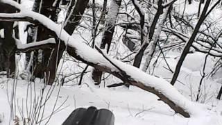 Лиса с  норы, работа норной собаки #ягдтерьер #охота #норная