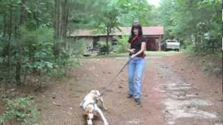 How To Train Your Dog Not To Pull - Loose Leash, Off Leash - Sit Up N Listen Dog Training