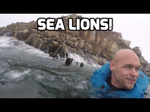 GoPro Hero4: Swimming With Sea lions!
