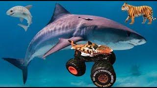 Tiger Shark Hot Wheels Monster Truck Unboxing & Review!!