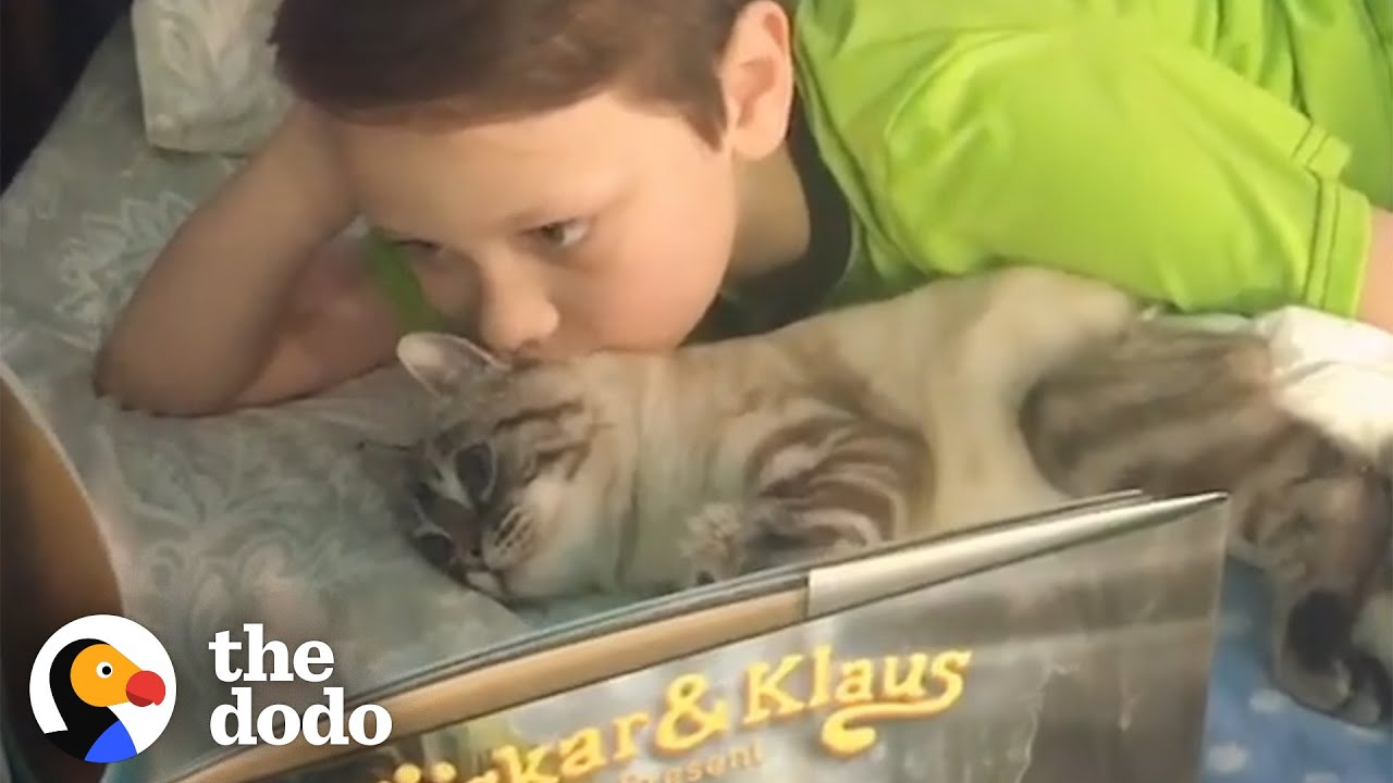Little Boy Reads Books To The Cat His Family Rescued | The Dodo
