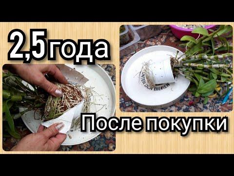 Дендробиум НОБИЛЕ  пересадка и самый лучший СУБСТРАТ ☺Как посадить орхидею )