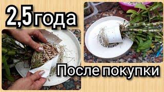 дендробиум НОБИЛЕ  пересадка и самый лучший СУБСТРАТ Как посадить орхидею )