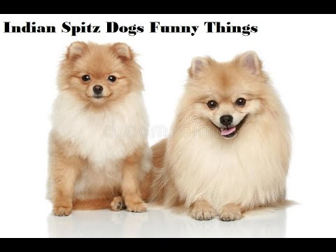 ♥Cute Puppies Doing Funny Things 2020♥ 3 Cutest Dogs  with rose plant harshil raval