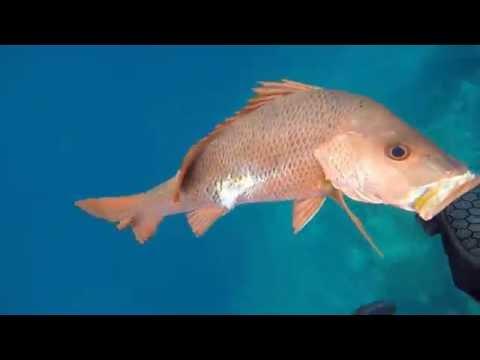 Spearfishing Great Barrier Reef 2016