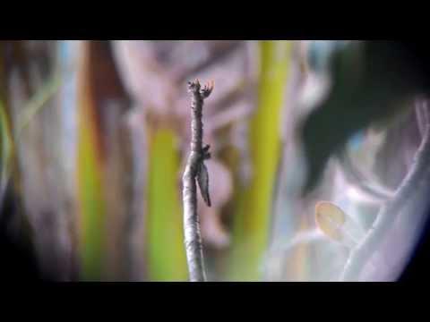 Review Hasil Lensa Tele 8x Zoom pada Zenfone 5