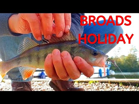 Drop Shotting For Perch - Fishing On The Norfolk Broads