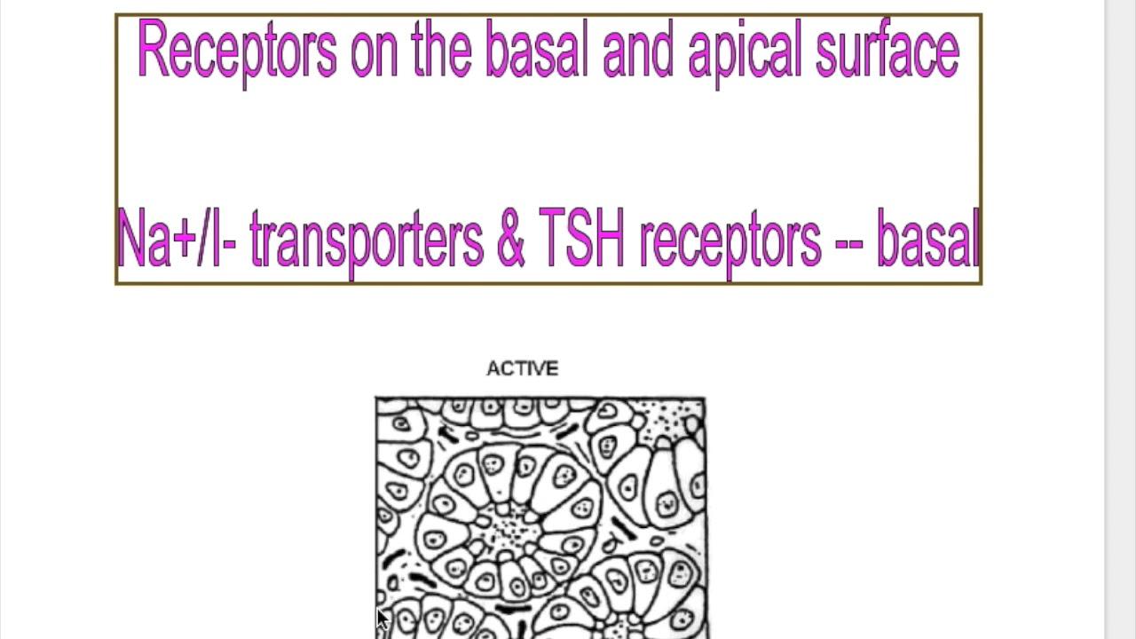 THYROGLOSSAL CYST, THYROID CLINICAL ANATOMY - YouTube