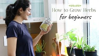 Grow with Me - Herbs from Kitchen Spices | Ep 1