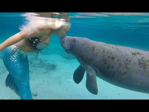 Mermaid Melissa: The Manatee Whisperer - Manatee Kisses A Mermaid!