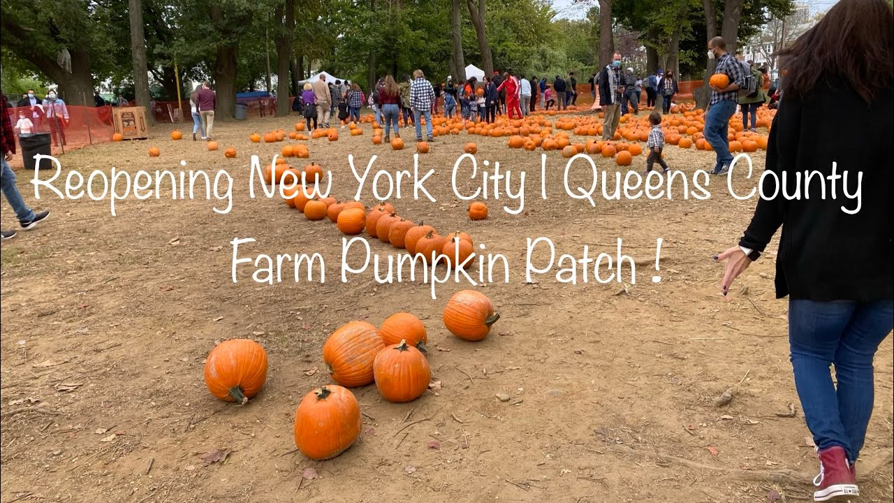 Reopening New York City Queens County Farm Pumpkin Patch Youtube