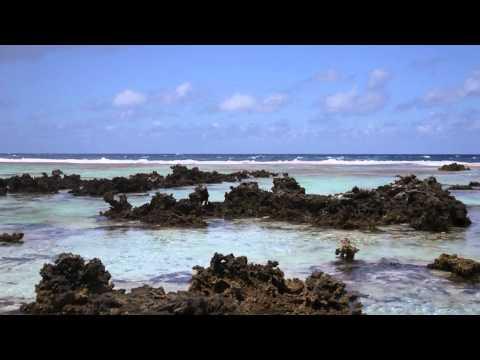 Island Week - Baby Reef Sharks in Rangiroa, Polynesia Raw Travel (Raw Vegan Show #63)