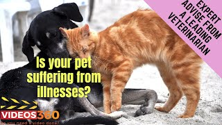 Now Trending - How to care for your pets suffering from illness at their final stage of life – Dr. Rand Spongberg