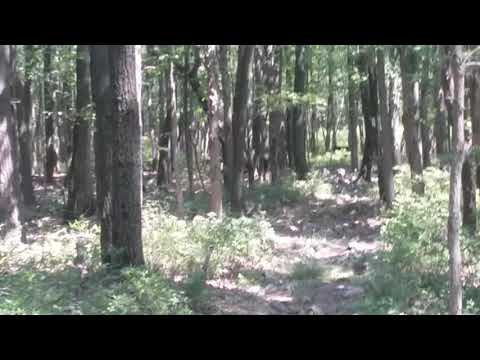 The Blackalachian - Day 113 Part 4. Bear sighting!!!