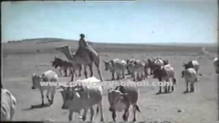 SOMALI YOUTH   Ubaxa Dalka  Coming Soon   Somali Documentary by Nabiil Nur 1