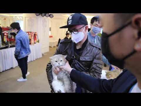 Vietnam holds first national cat show