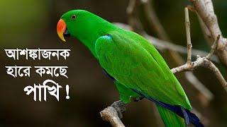 মুক্ত হলো শত শত পাখি | Birds Release | Dhaka University | Somoy TV