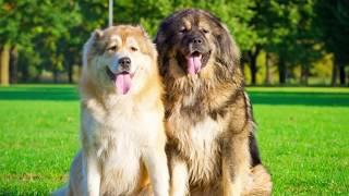 Как выбрать собаку? Советы инструктора по дрессировке