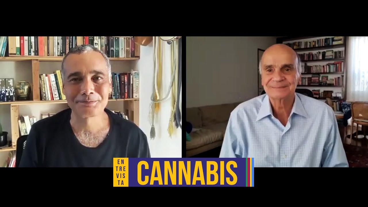 O avanço no debate sobre cannabis medicinal | Sidarta Ribeiro