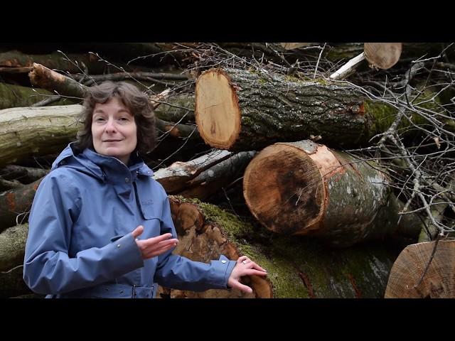 Wald und Baumwesen unterstützen - Podcast zum Lichtvertrauen - Folge 2