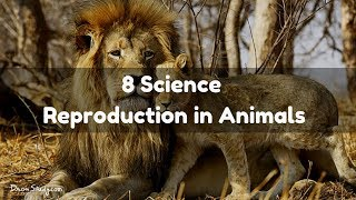 Reproduction in Animals : CBSE Class 8 Science
