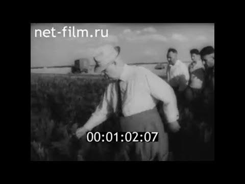 1964г. п.Заволжский совхоз Палласовский Палласовский район Волгоградская обл