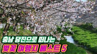 [당진 가볼만한곳] 충남 당진 벚꽃여행지 베스트5 | …