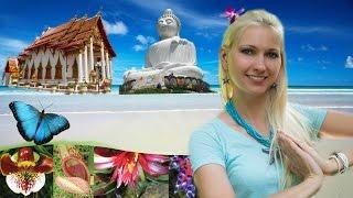 Обзорная экскурсия по Пхукету, Большой Будда, Ботанический сад Пхукет(В этом видео я расскажу что посмотреть на пхукете, обзорная экскурсия по Пхукету самостоятельно, пхукет..., 2014-12-03T14:19:46.000Z)