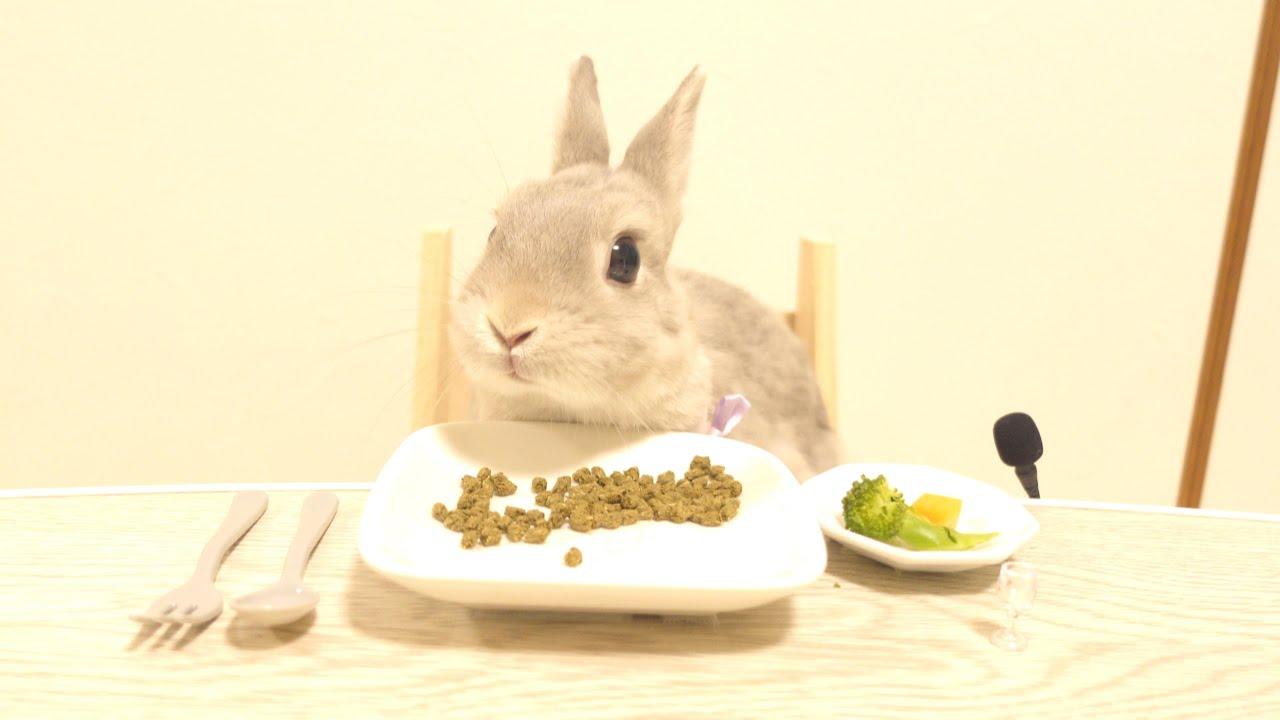 【ASMR】うさぎさんと向かい合って食べるディナーは格別の味がした