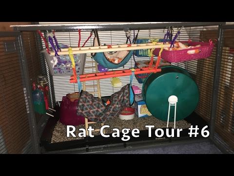 Rat Cage Tour #6