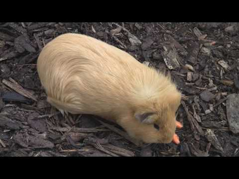 How to enjoy a day in the Dublin Zoo, Ireland. HD